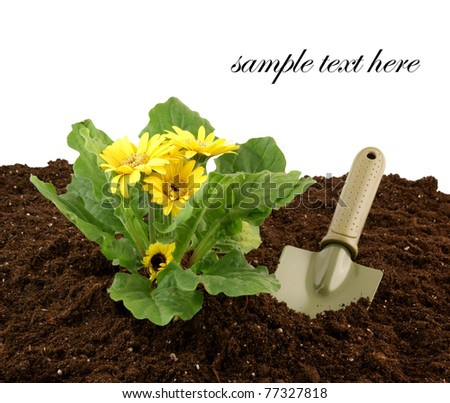 Flowers growing in the soil and spade isolated on white - stock photo