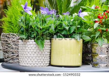 Flowers in bright pots sold at the street shop