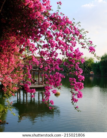 Flowers in chinese park. Kunming. China. - stock photo