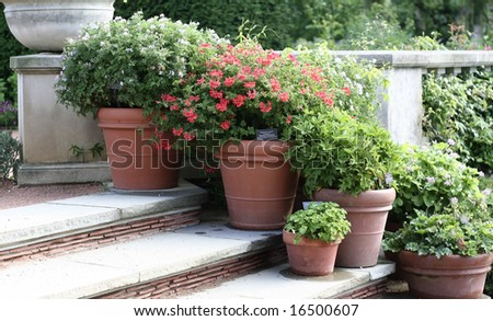Flowers in clay pots on stairway - stock photo