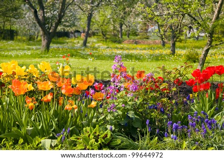 Flowers in front of orchard garden in springtime - stock photo