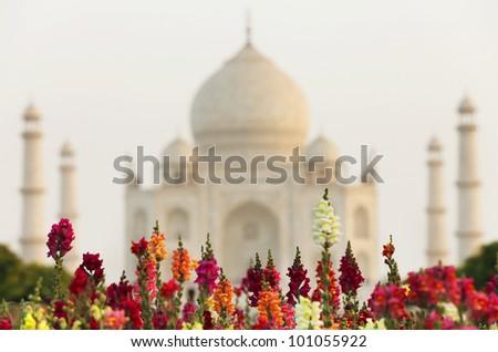 Flowers in front of  Taj Mahal, Agra, Uttar Pradesh, India - stock photo