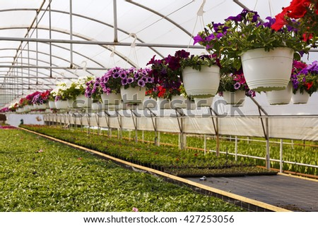 Flowers in greenhouse in spring - stock photo