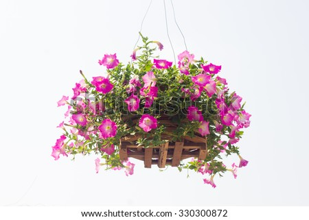 Flowers in hanging pot - stock photo