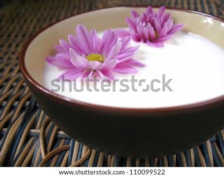 flowers in milk - stock photo