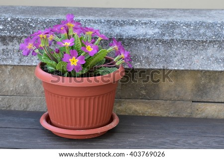 flowers in pots - stock photo