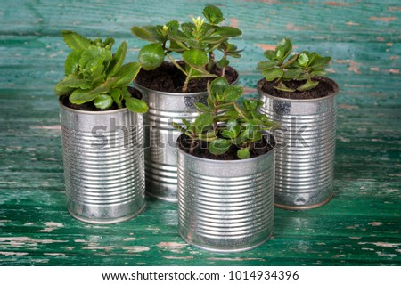 flowers in pots of cans on wooden background