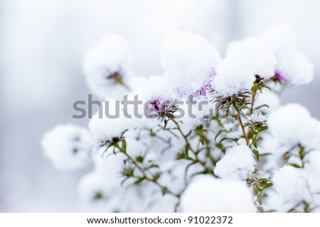 Flowers in snow on blurry background - shallow DOF