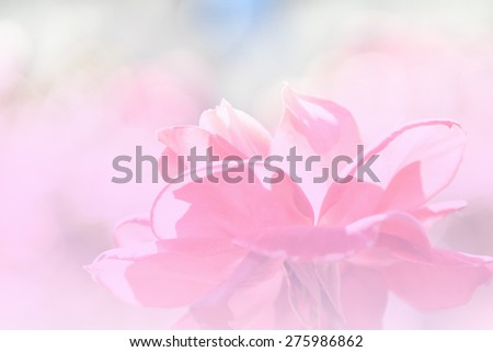 flowers in soft color made blur style for background