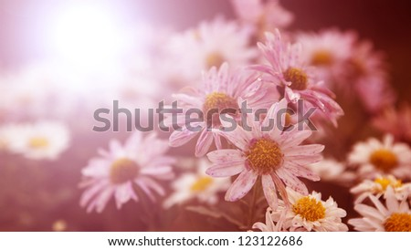 Flowers in sunset - stock photo