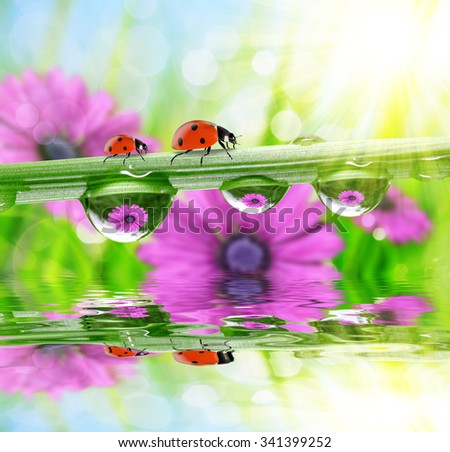 Flowers in the drops of dew on the green grass and ladybirds. Nature background. - stock photo