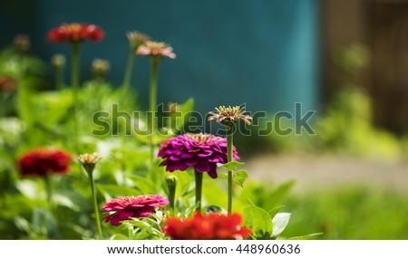 Flowers in the garden - stock photo