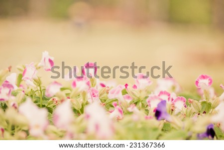 Flowers in the garden soft focus on pastel tone. - stock photo