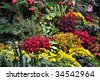 Flowers in the historic butchart gardens, vancouver island, british columbia, canada - stock photo