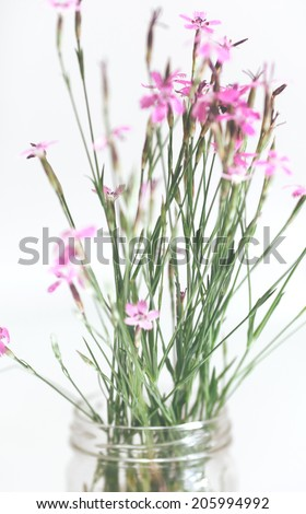Flowers in the pot - stock photo