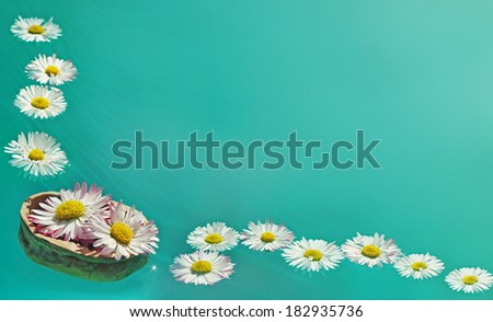flowers in the water  - stock photo