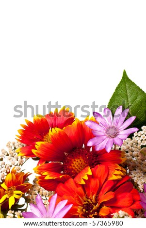 Flowers isolated on white with space for text or design - stock photo