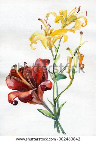 flowers ,lily,  watercolor  - stock photo