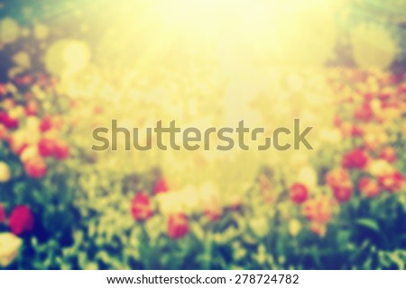Flowers, nature bokeh background, shining sun light. Blur, defocused, blurred in vintage style. - stock photo