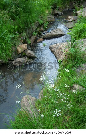Flowers Near A Stream Among Stones