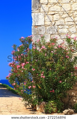 Flowers near sunny stone wall from Mediterranean town of Rovinj, Croatia - stock photo