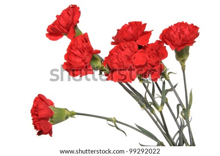 Flowers of a carnation are collected in a bouquet - stock photo