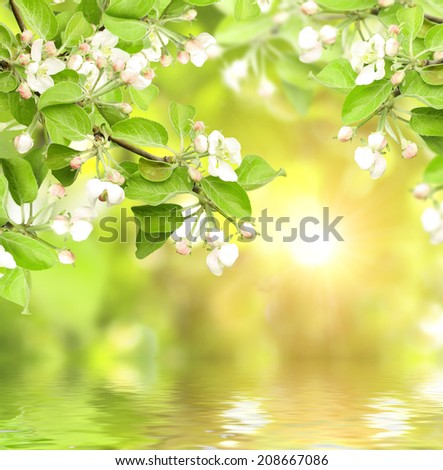 Flowers of apple and sun