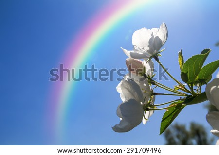Flowers of apple on the background of rainbow, macro - stock photo