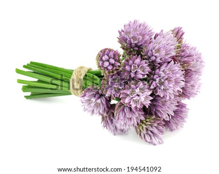 Flowers of chives on a white background - stock photo