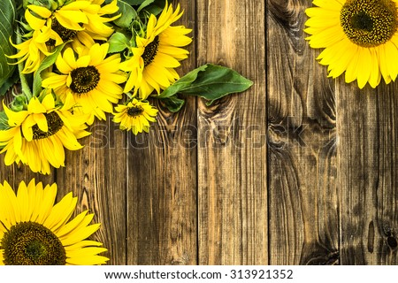 Flowers of sunflowers in yellow color on brown vintage wood background. Flowers backgrounds. - stock photo