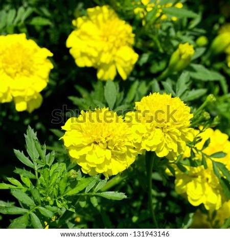 flowers of the field - stock photo