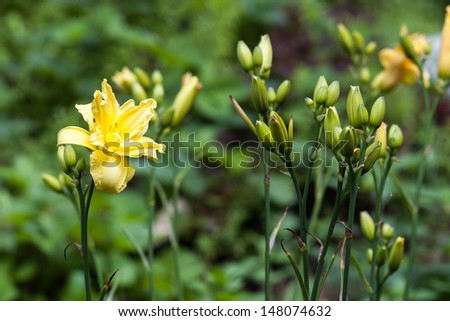 flowers on a background of green leaves - stock photo