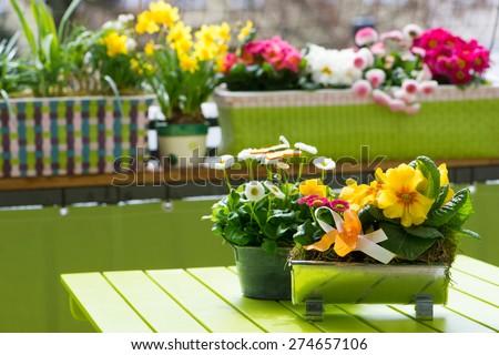 Flowers on a city balcony - stock photo