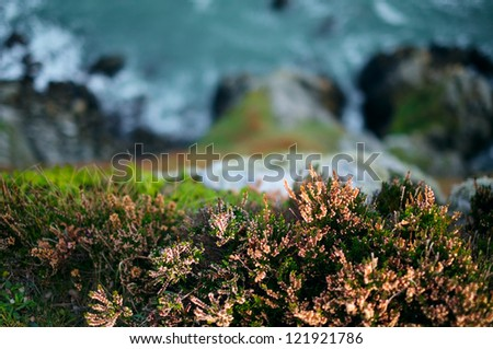 Flowers on a Cliffs near Howth town. Ireland. - stock photo