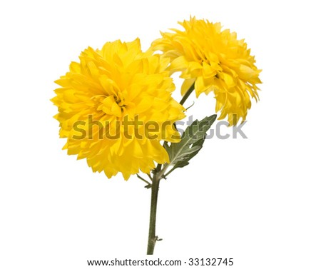 flowers on a stem - stock photo