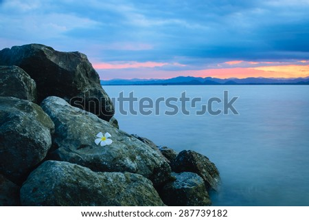 Flowers on an ocean-side cliff, Thailand - stock photo