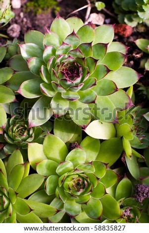 flowers on colorfull background - macro photo - stock photo