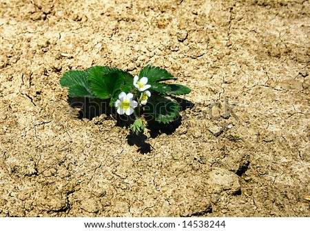 flowers on cracked earth - stock photo
