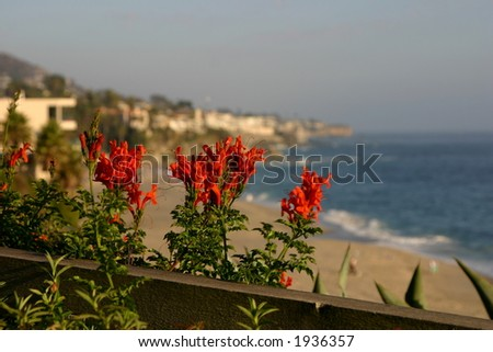 Flowers on the beach - stock photo