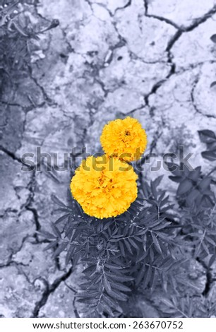 Flowers on the dry land - stock photo