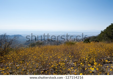 Flowers on the South Rim Trail - stock photo
