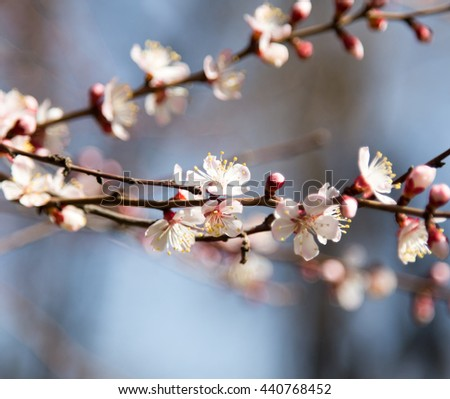 flowers on the tree against the blue sky - stock photo