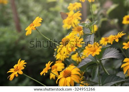 flowers, outdoor shot - stock photo
