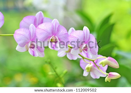 flowers pink orchids on green background - stock photo