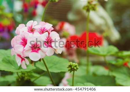 flowers,pink,petals,small,garden,nature,amazing,lovely - stock photo