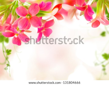 Flowers pink with green leaf - stock photo