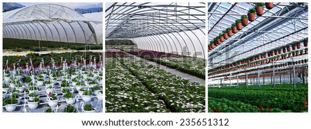 Flowers planted in greenhouse - stock photo