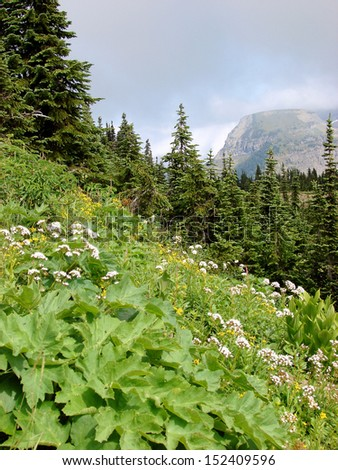 flowers plants in mountains - stock photo