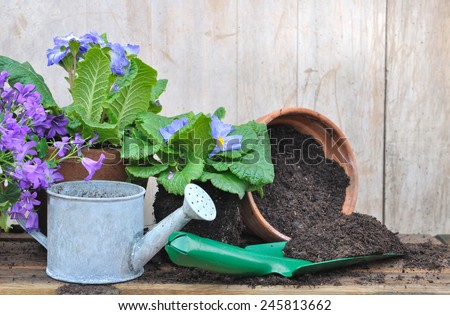flowers pot with little metal watering can and planter filled with soil  - stock photo