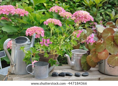 flowers pots, watering cans on wooden table in front of hydrangea flowers in garden  - stock photo